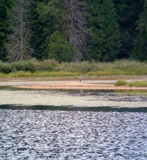 Blue-Heron-Sandner-Creek