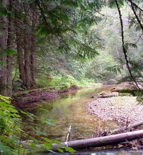 Riparian-Habitat-Sandner-Creek