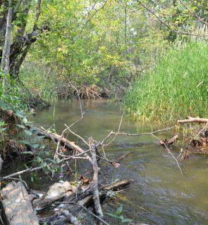 Water-Birch-1