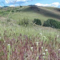 DL 492 Grand Forks Grassland